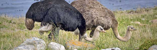 Nigeria's 2015 Appropriation Bill: Legislators Adopt the Ostrich Strategy